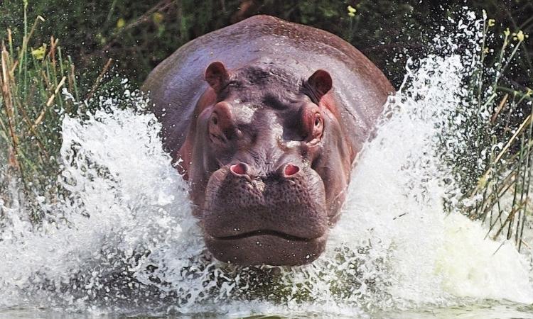 Самые опасные животные в мире