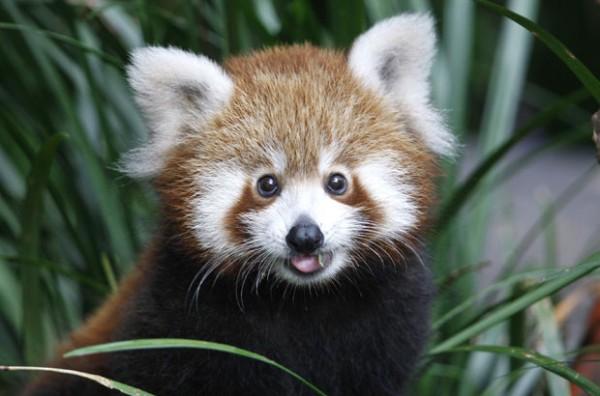 Очаровательные и милые животные 10