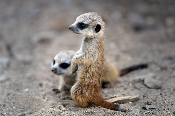 Очаровательные и милые животные 2