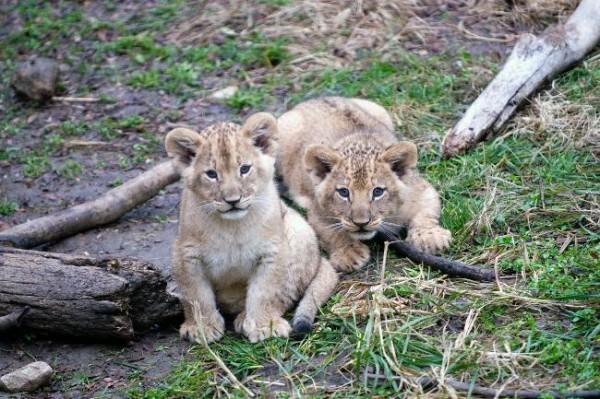Очаровательные и милые животные 4